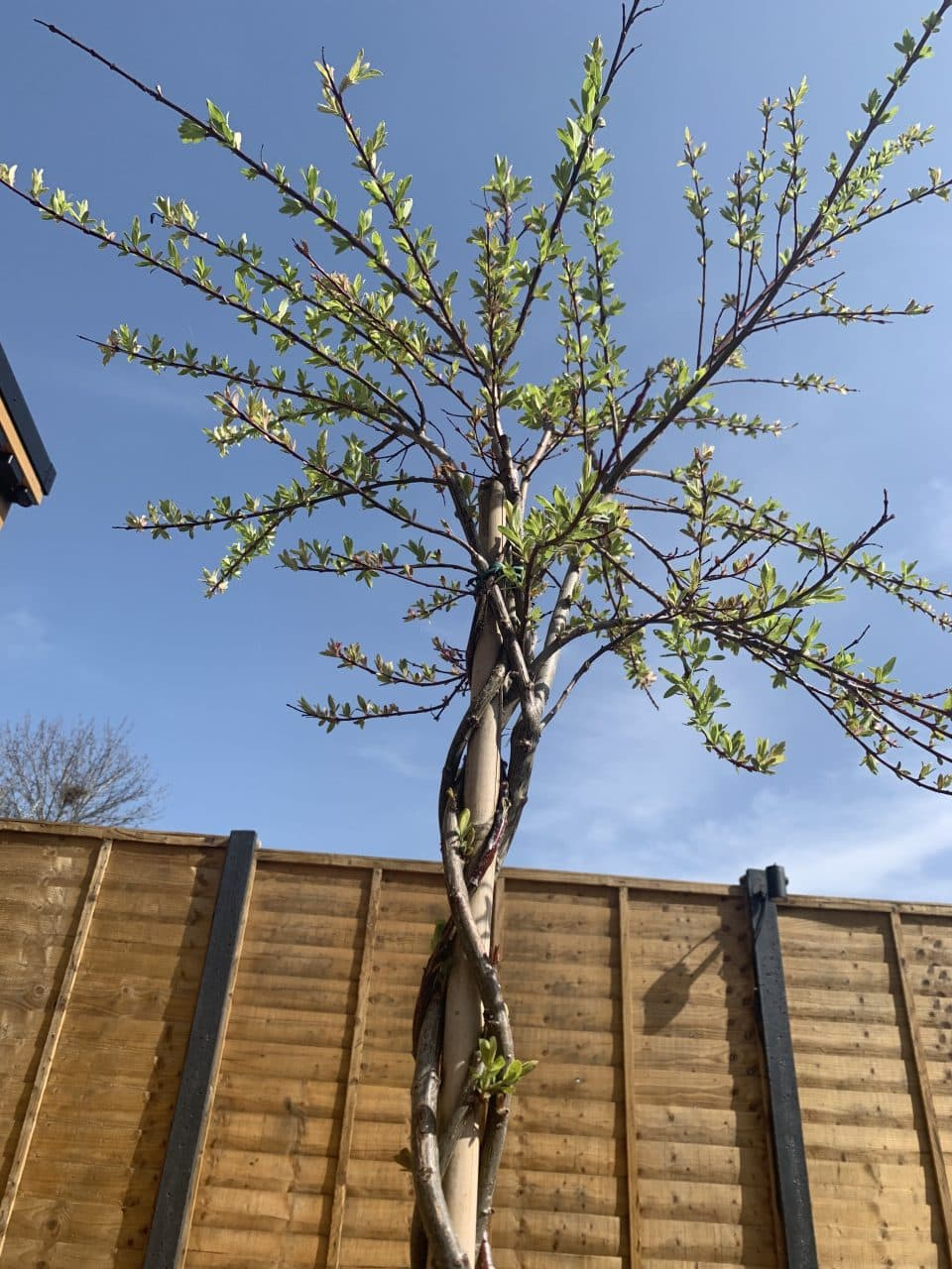 Our tree - Moments by Katie Mitchell